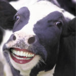 1480757482-3246-happy-cow
